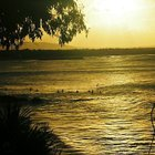 Photo of Tea Tree (Noosa)