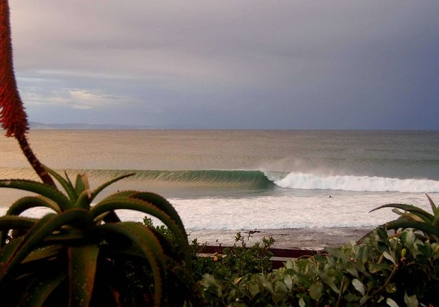 sashimisteve's photo of Jeffreys Bay (J-Bay)