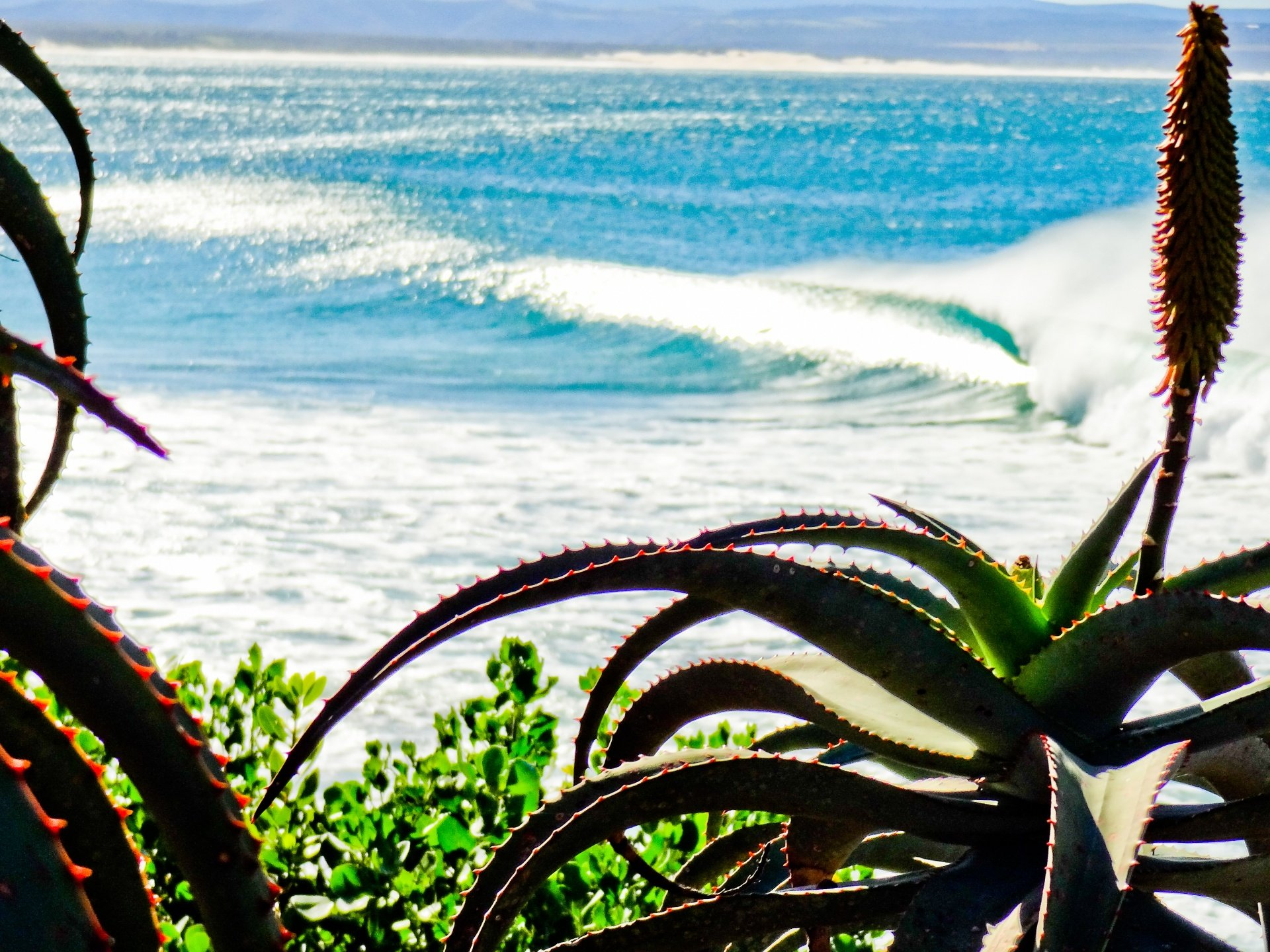 mike_ruissen's photo of Jeffreys Bay (J-Bay)