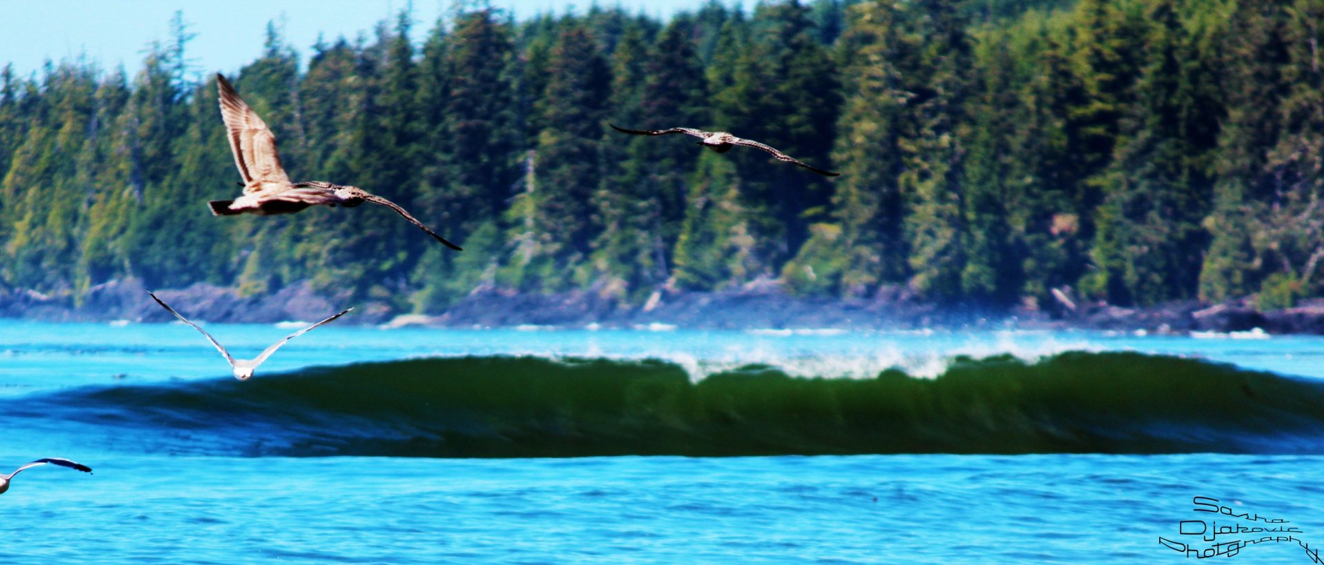 Sasha Djakovic's photo of Vancouver Island South (Jordan River)