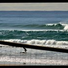 Photo of Surfers Paradise (Gold Coast)
