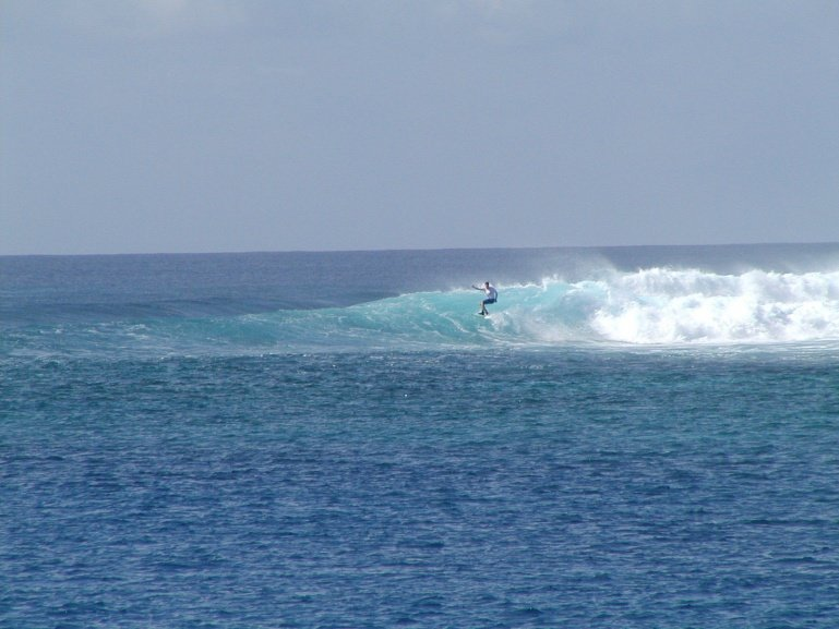 reef's photo of Tiger Stripes