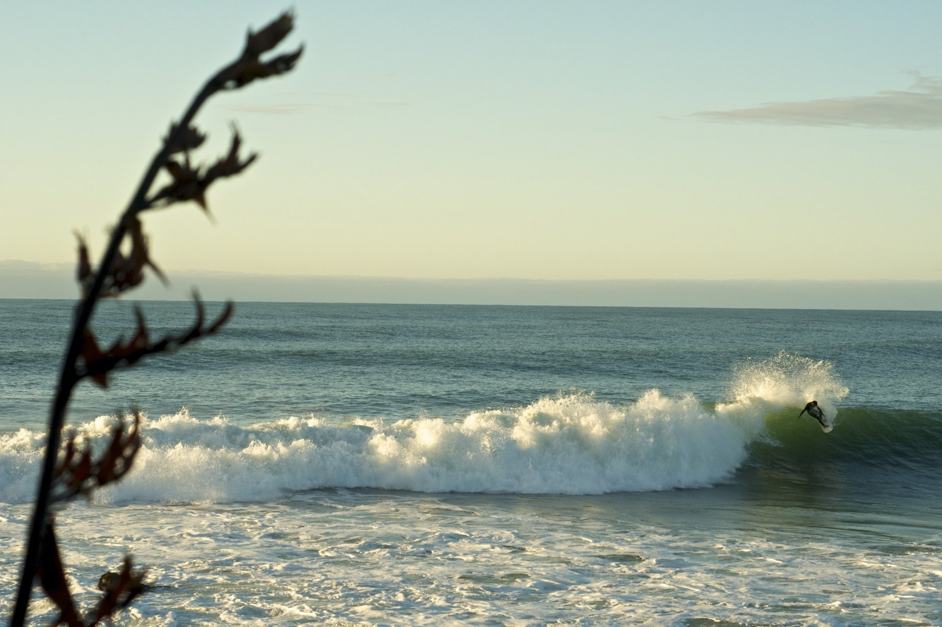 OregonSeanFoto's photo of Raglan