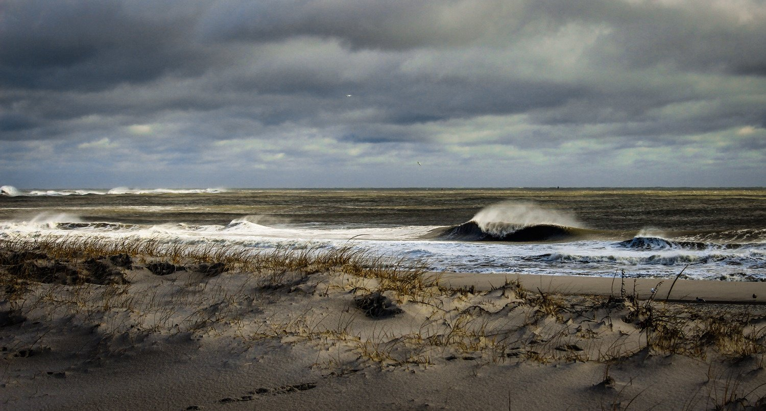 Max Krumpholz's photo of Wildwood