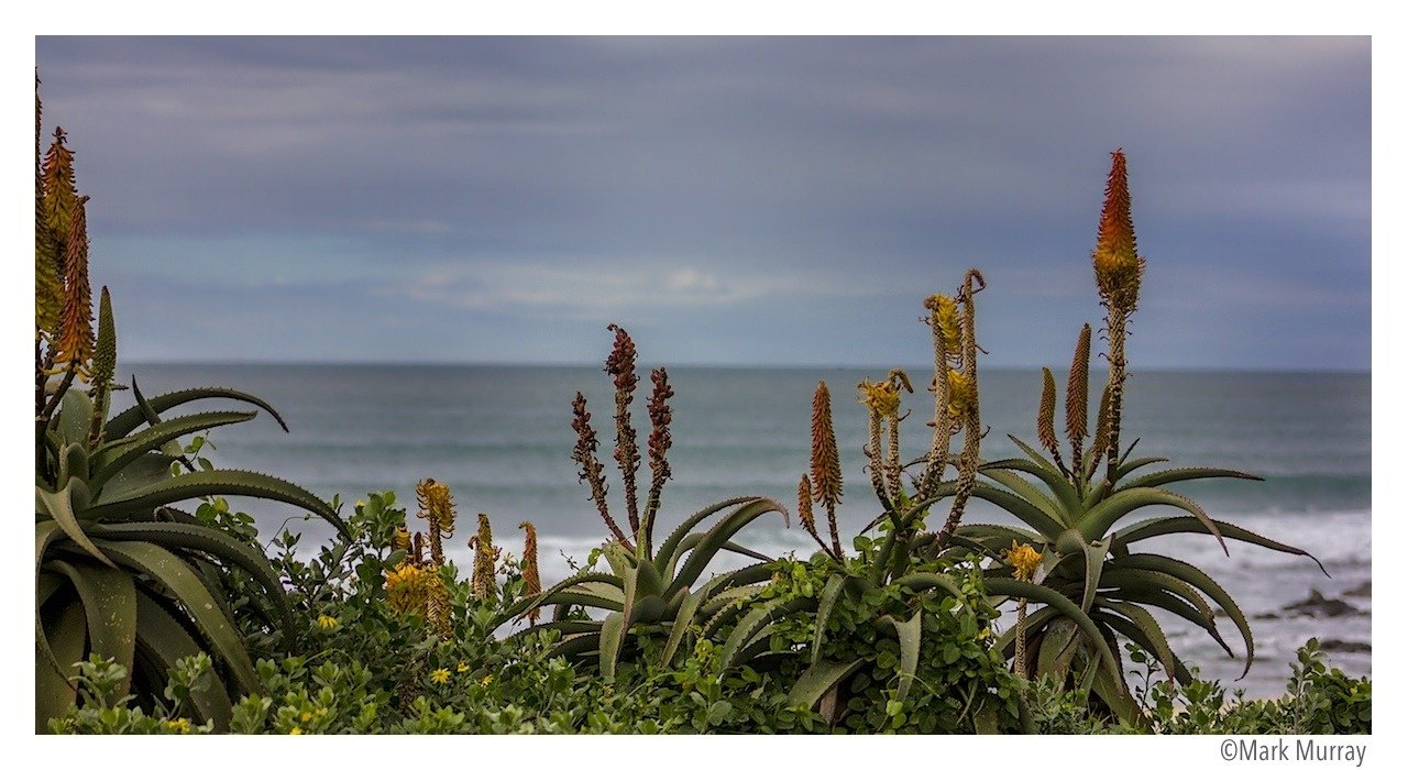 Mark Murray's photo of Jeffreys Bay (J-Bay)