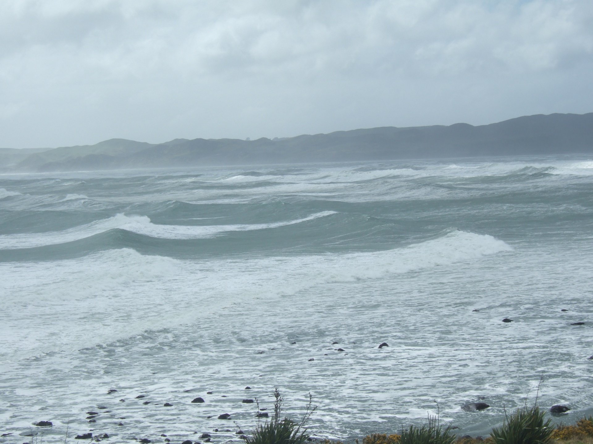 Tania van Megchelen's photo of Raglan
