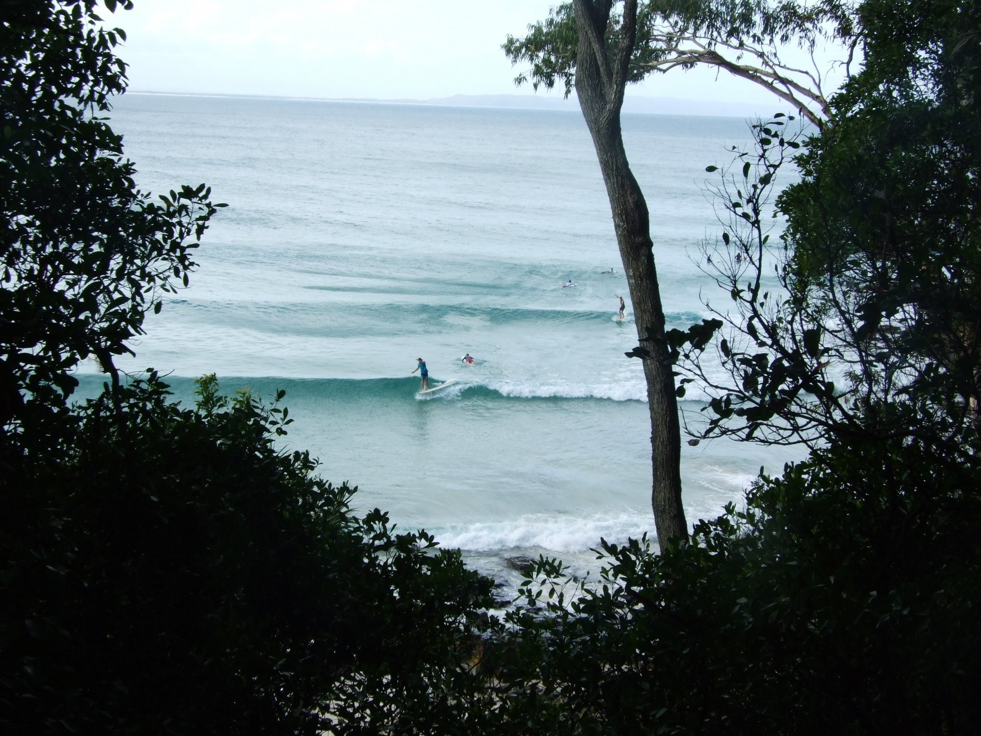 ehmaryon's photo of Tea Tree (Noosa)