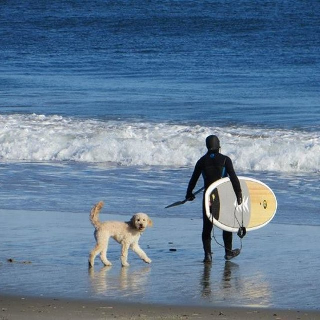 Salisbury Surf Report Surf Forecast And Live Surf Webcams