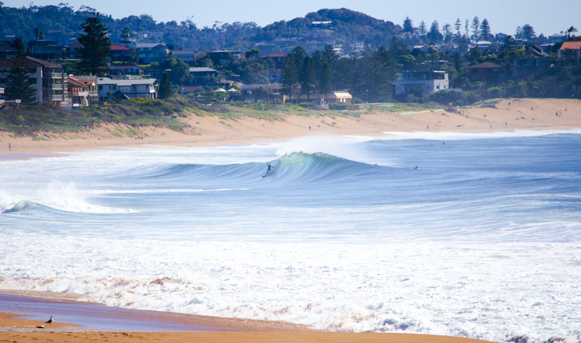 FrenchyNSW's photo of South Narrabeen