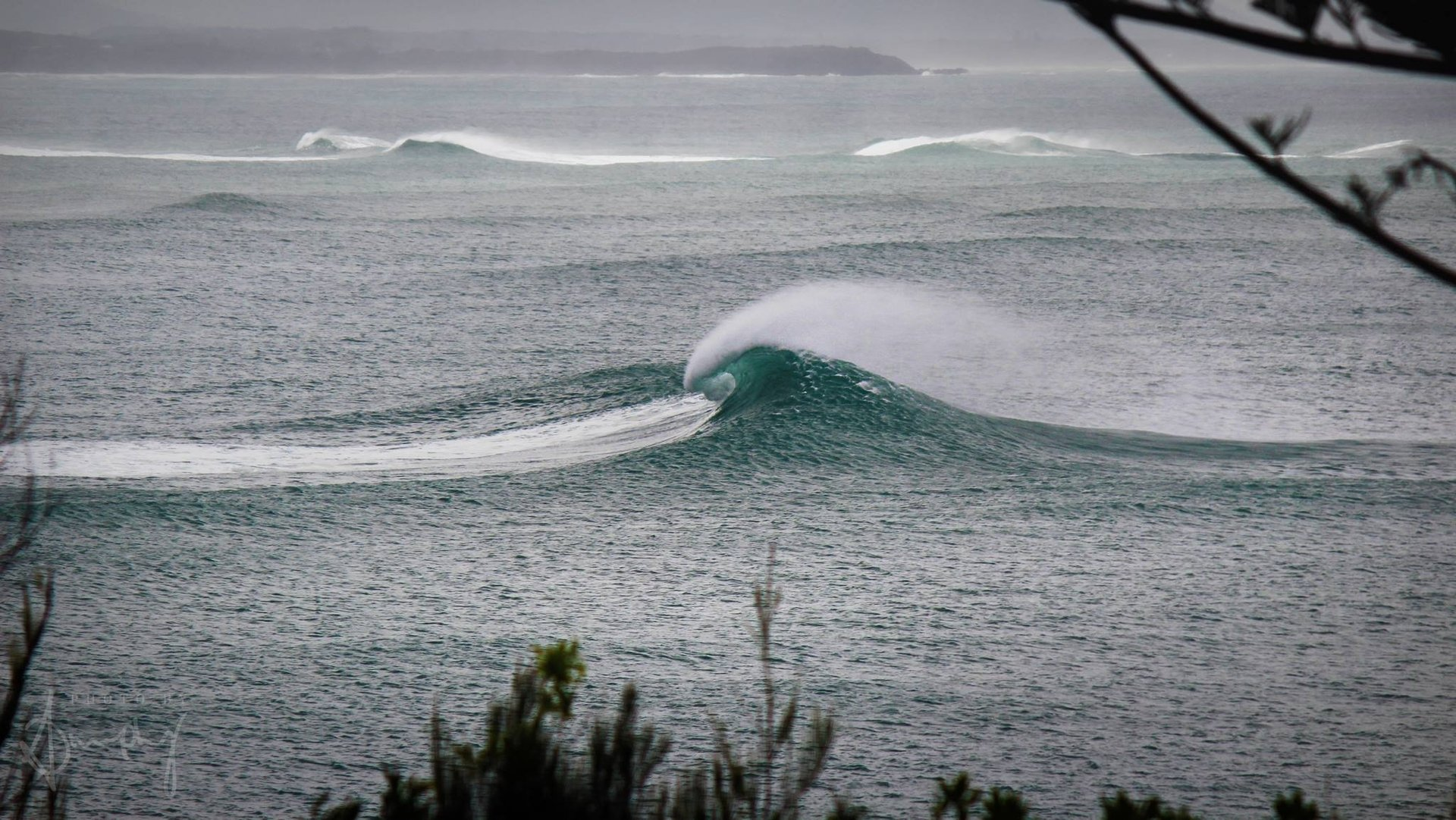 KennyG's photo of Forster