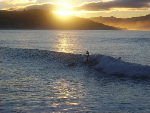 fido dido's photo of St Clair (Dunedin)