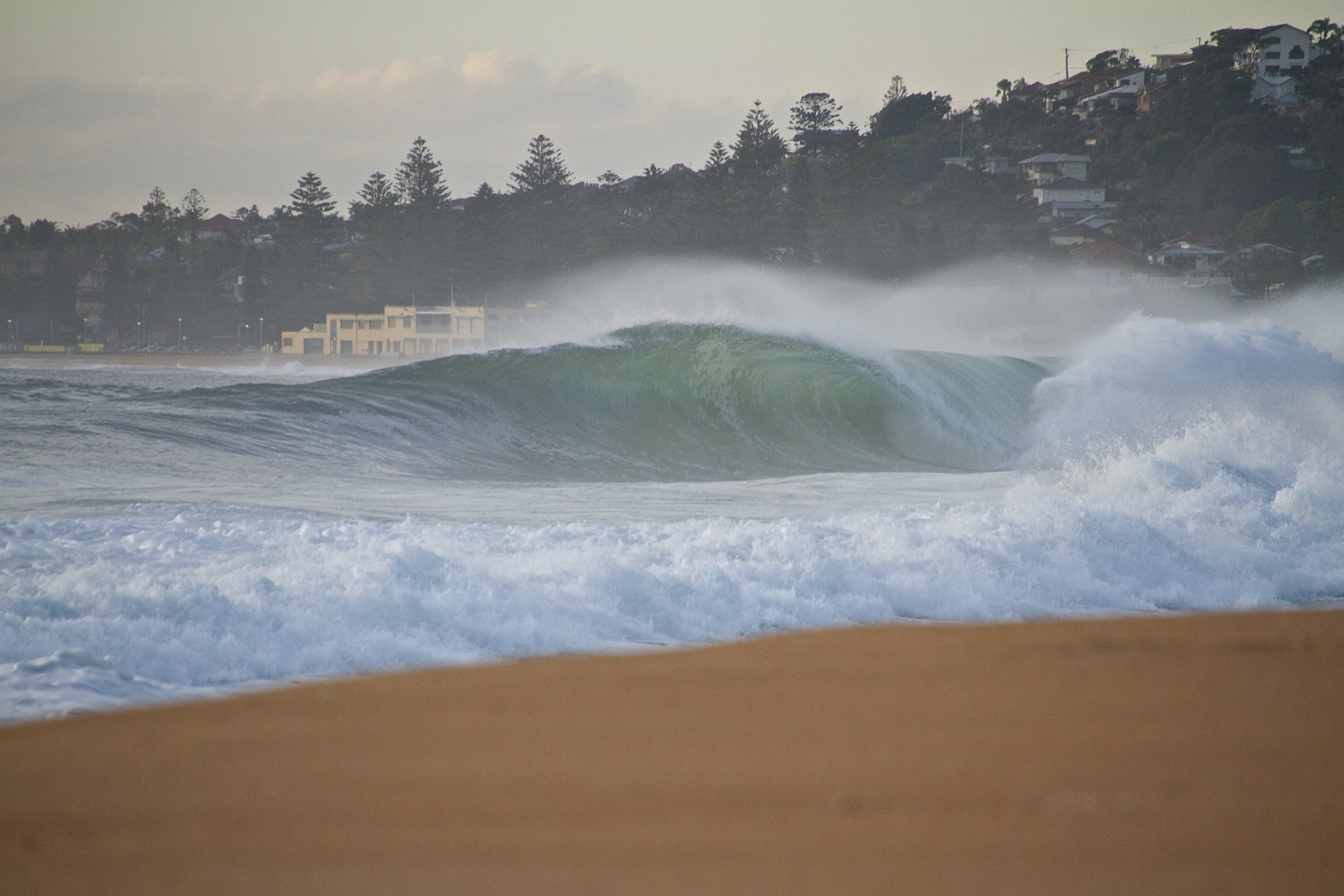 zinon's photo of South Narrabeen