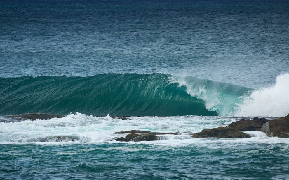 amurphy_photo's photo of Forster