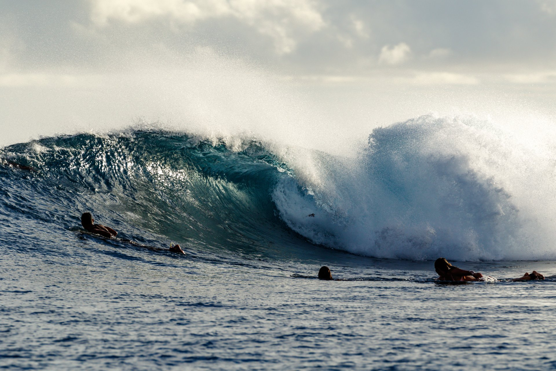Dukelawson's photo of Suicides - Central Mentawai